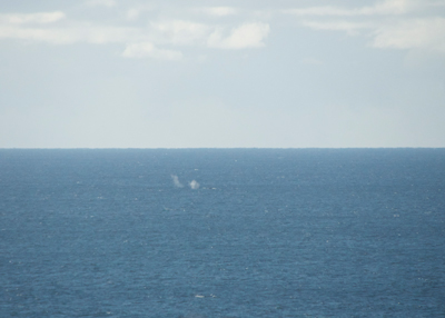 First Whales seen Point Lookout, Stradbroke Island